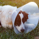 Injured By An Dog Attack? What You Need To Do To Get Compensated
